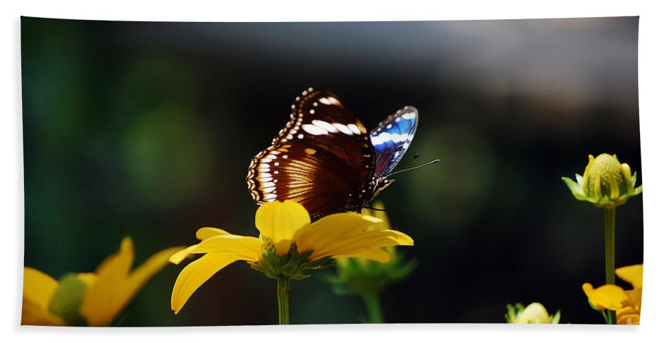 Blue Moon Butterfly Bath Sheet featuring the photograph Blue Moon by Robert Meanor