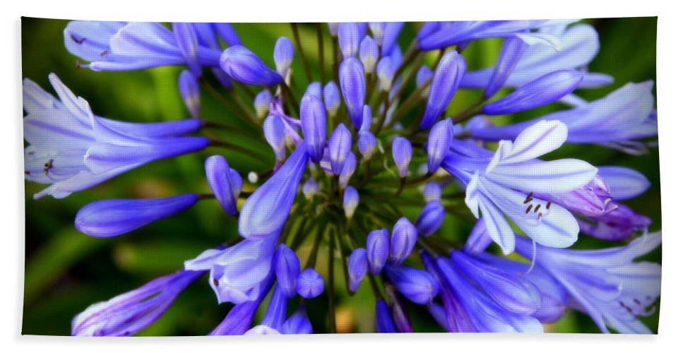 Blue Hand Towel featuring the photograph Blue On Blue by Karen Wiles