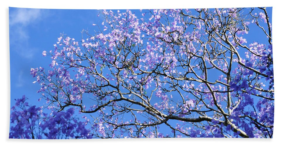 Photography Bath Sheet featuring the photograph Blue Sky And Jacaranda Blossoms by Kaye Menner