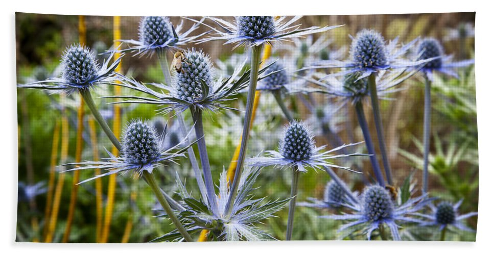 Blue Flowers Bath Sheet featuring the photograph Blue Stem Sea Holly by Kelley King