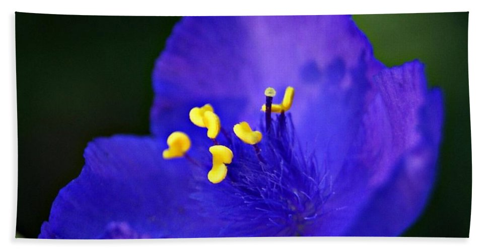 Blue Bath Sheet featuring the photograph Blue Wildflower 1 by Joe Faherty