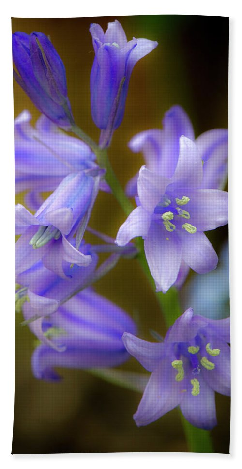 Bluebells Hand Towel featuring the photograph Bluebells by Gary Eason