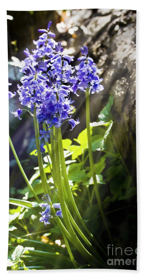 Background Hand Towel featuring the photograph Bluebells In The Woods by Simon Bratt Photography LRPS