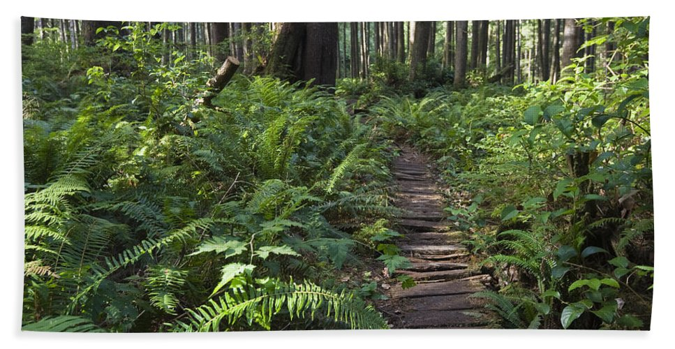 Mp Hand Towel featuring the photograph Boardwalk Winds Through The Forest by Konrad Wothe