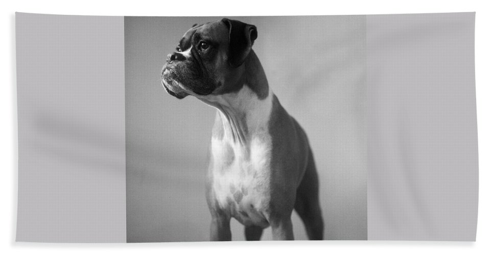 Boxer Hand Towel featuring the photograph Boxer Dog by Stephanie McDowell