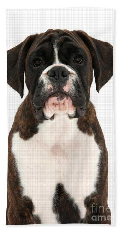 Nature Hand Towel featuring the photograph Boxer Pup by Mark Taylor