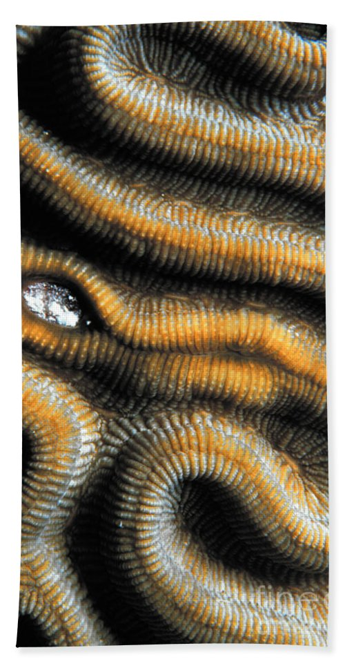 Brain Coral Hand Towel featuring the photograph Brain Coral by Mike Nellums