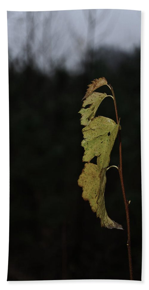 Autumn Bath Sheet featuring the photograph Branch Of Maple by Michael Goyberg