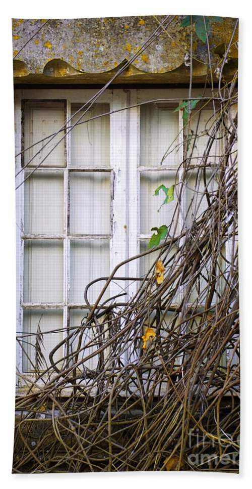 Autumn Hand Towel featuring the photograph Branchy Window by Carlos Caetano