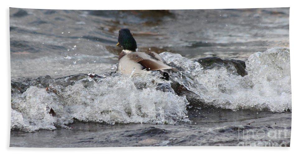 Mallards Bath Sheet featuring the photograph Breaking Threw by Lori Tordsen