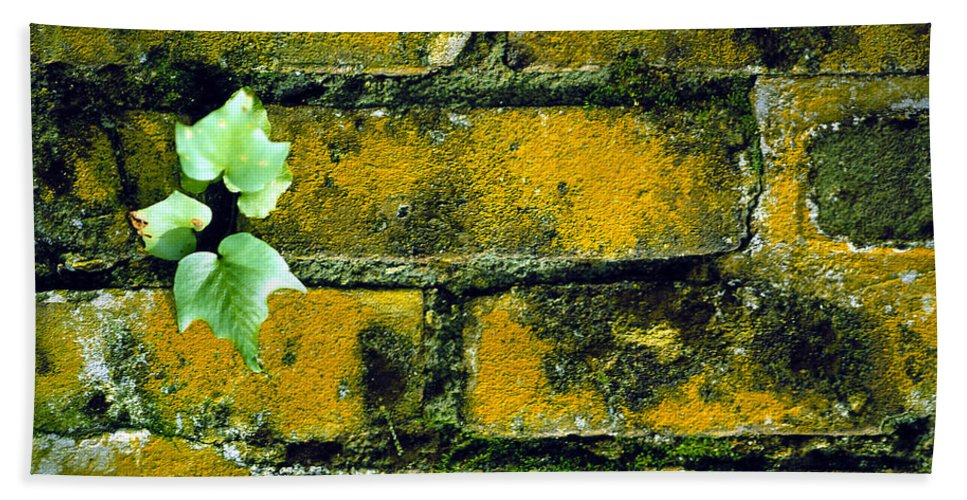Brick Bath Sheet featuring the photograph Brick Ivy by Mike Nellums