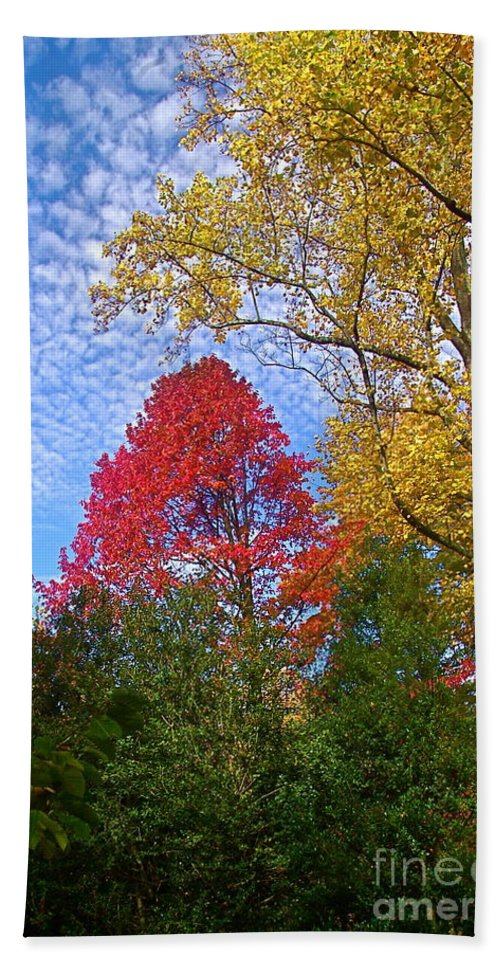 Trees Bath Sheet featuring the photograph Bright Autumn Color by Byron Varvarigos