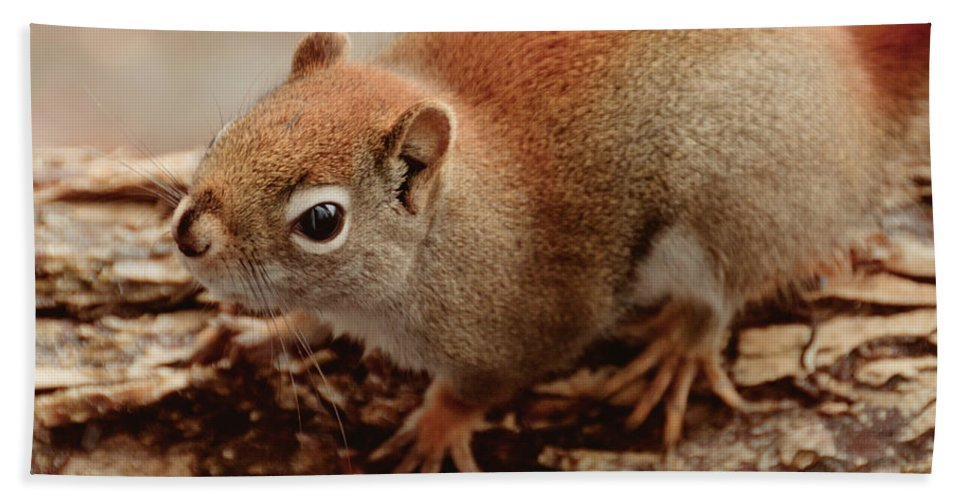 Squirrel Bath Sheet featuring the photograph Bright Eyes by Cheryl Baxter