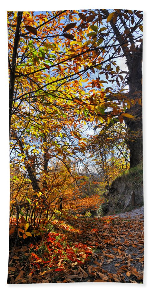 Landscapes Hand Towel featuring the photograph Bright Leaves by Guido Montanes Castillo
