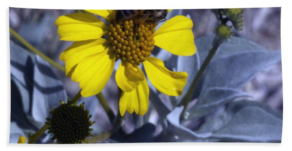 Brittlebush Bath Sheet featuring the photograph Brittlebush Bee by Linda Dunn