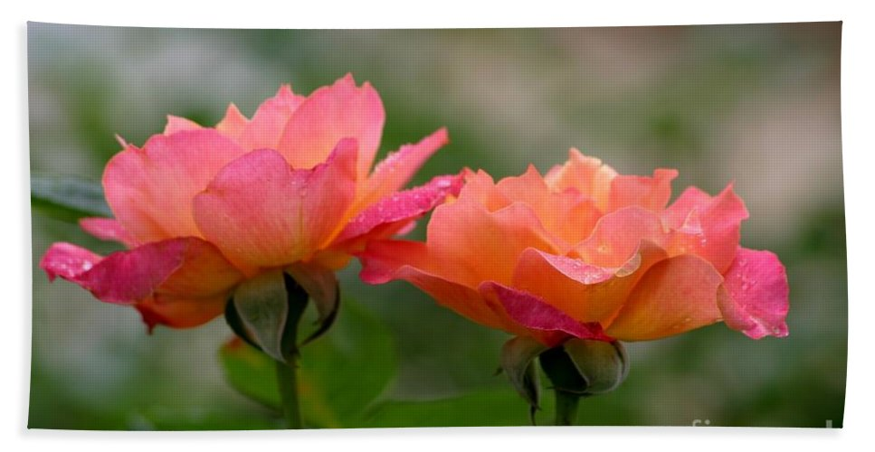Roses Bath Towel featuring the photograph Broadway by Living Color Photography Lorraine Lynch