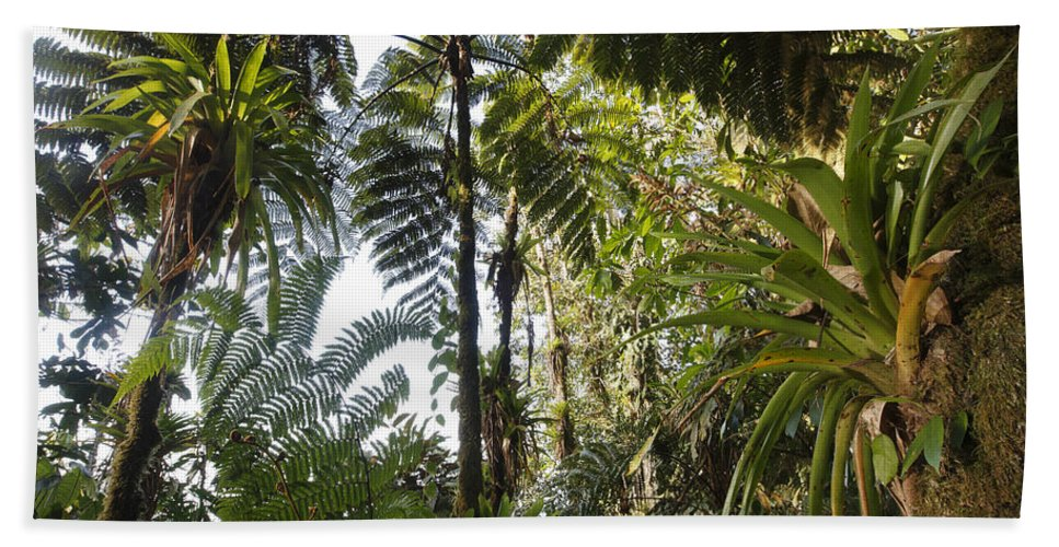 Mp Hand Towel featuring the photograph Bromeliad And Tree Ferns by Cyril Ruoso