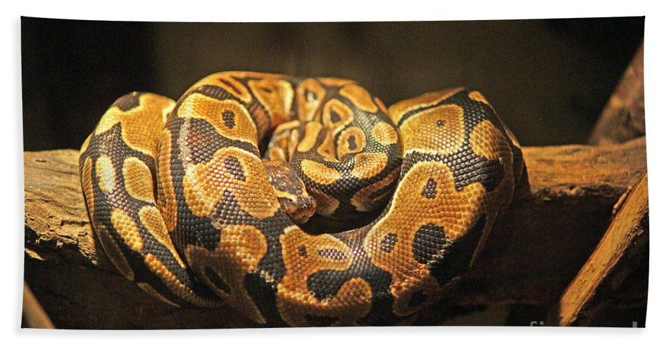 Snakes Bath Sheet featuring the photograph Brown And Black Snake by Randy Harris
