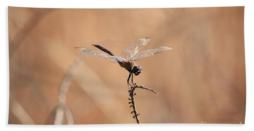 Dragonfly Hand Towel featuring the photograph Brown Dragonfly And Brown Reeds by Carol Groenen