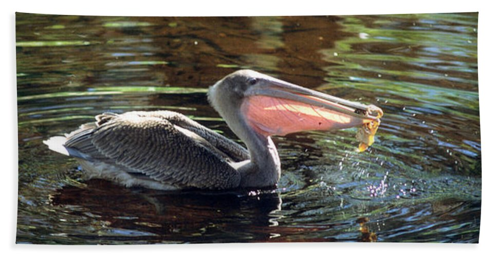 Brown Pelican Hand Towel featuring the photograph Brown Pelican Afloat by Larry Allan