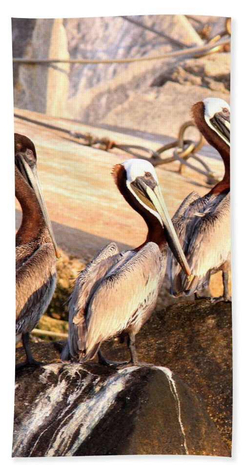 Bird Bath Sheet featuring the photograph Brown Pelican - Holding Things Together by Travis Truelove