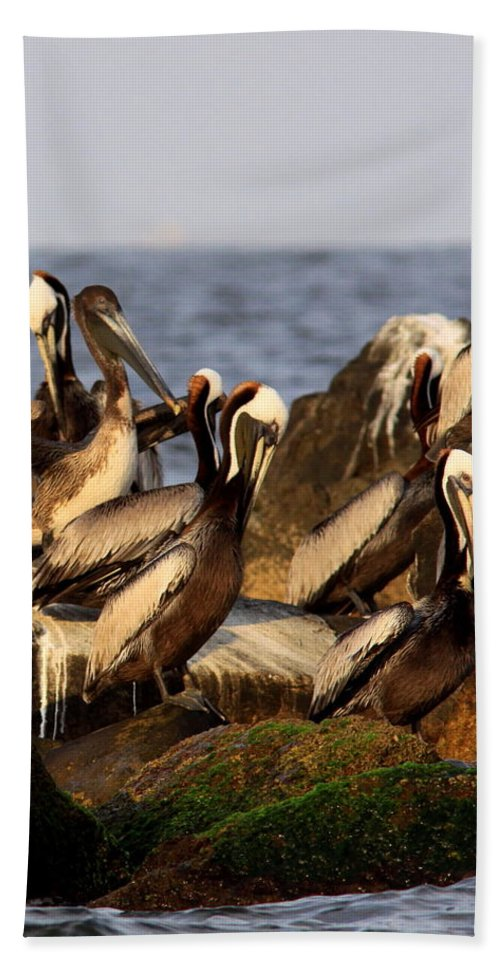 Pelican Bath Sheet featuring the photograph Brown Pelicans - Beauty Of Sand Island by Travis Truelove