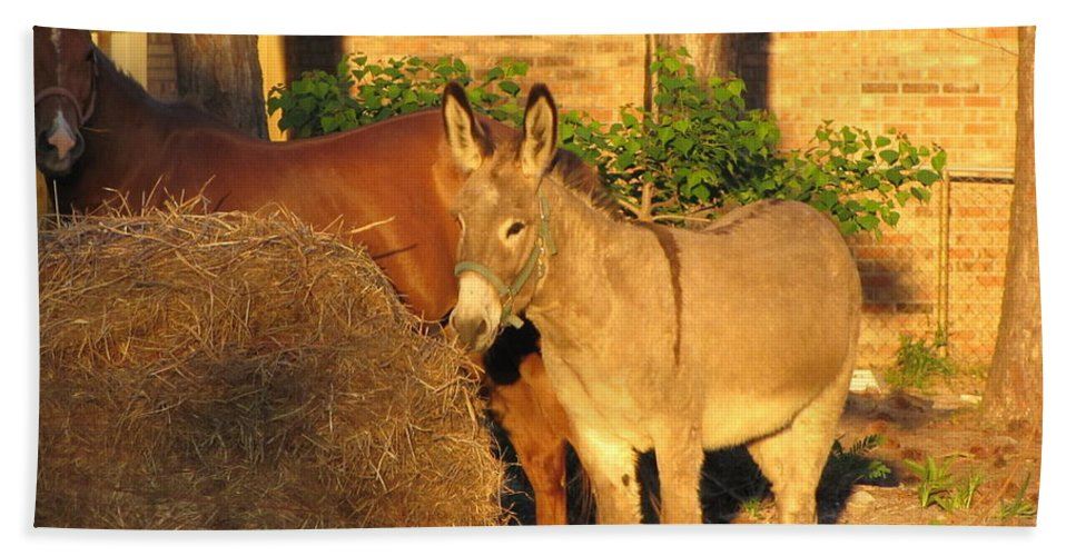 Wildlife Bath Sheet featuring the photograph Brown Sugar Eating Some Hay by Michelle Powell