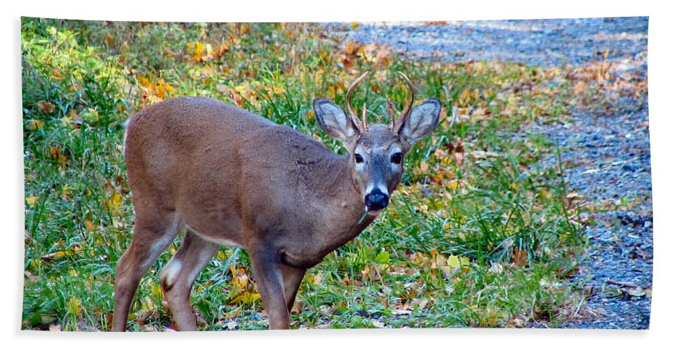 Deer Hand Towel featuring the photograph Buckly by Art Dingo
