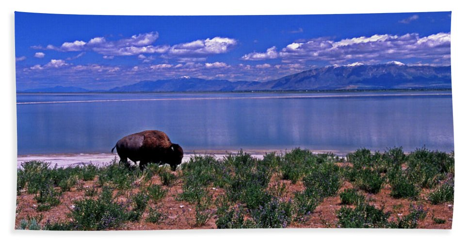 Utah Bath Sheet featuring the photograph Buffalo And The Great Salt Lake by Rich Walter