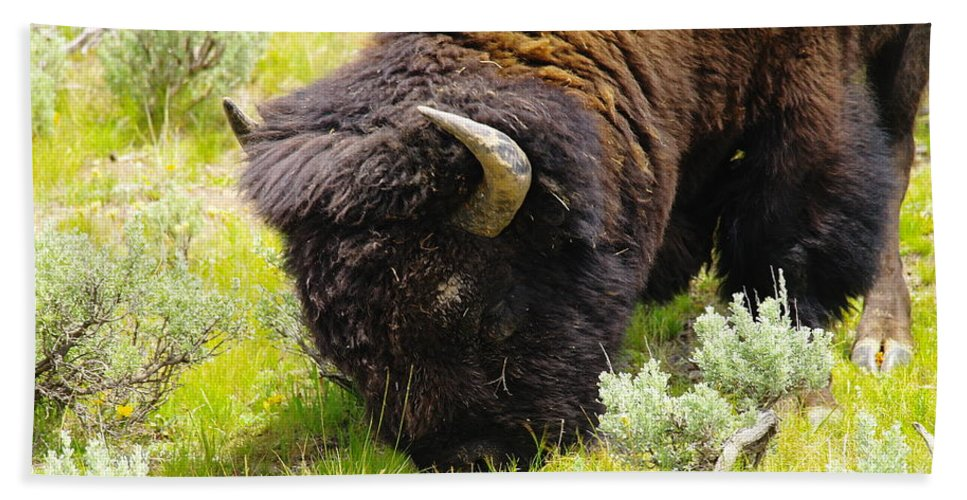 Bison Bath Towel featuring the photograph Buffalo Grazing by Jeff Swan