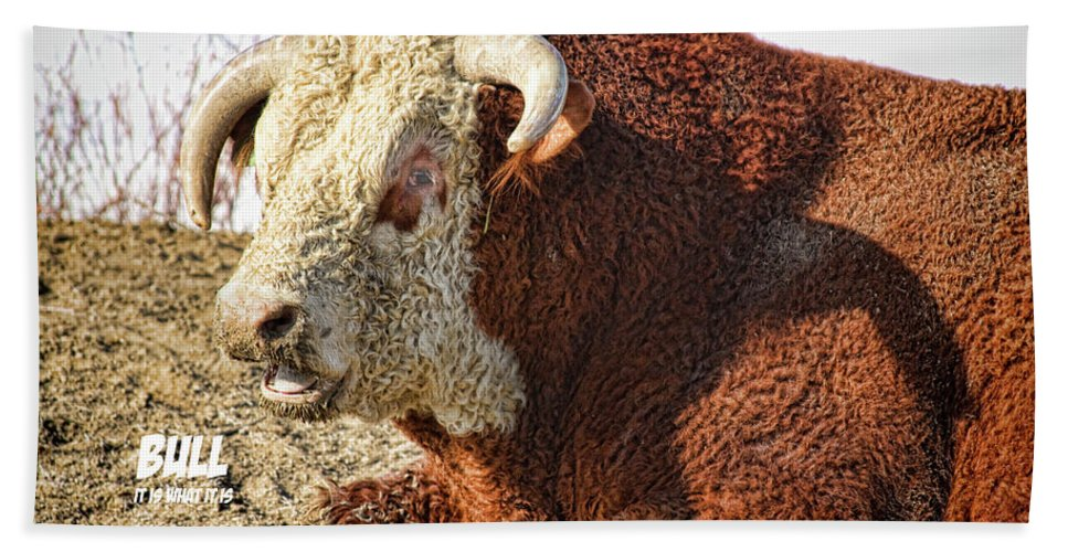 Bull Bath Sheet featuring the photograph Bull It Is What It Is by James BO Insogna