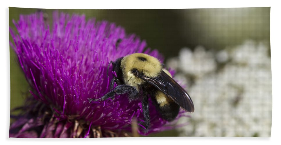 Bumble Bee Bath Sheet featuring the photograph Bumble Bee And Bristle Thistle by Kathy Clark