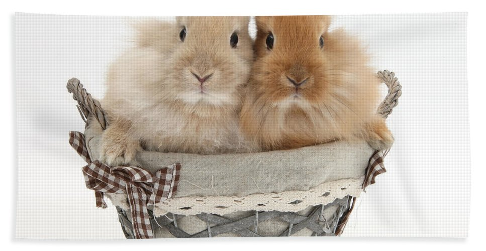 Nature Hand Towel featuring the photograph Bunnies A Basket by Mark Taylor