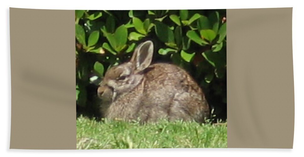 Rabbits Hand Towel featuring the photograph Bunny by Amy Hosp