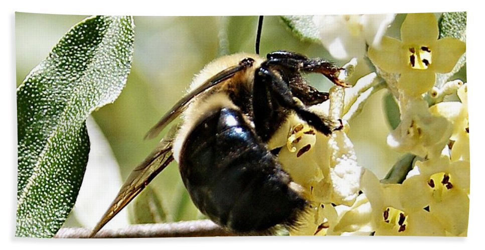 Busy Bath Sheet featuring the photograph Busy As A Bee by Joe Faherty