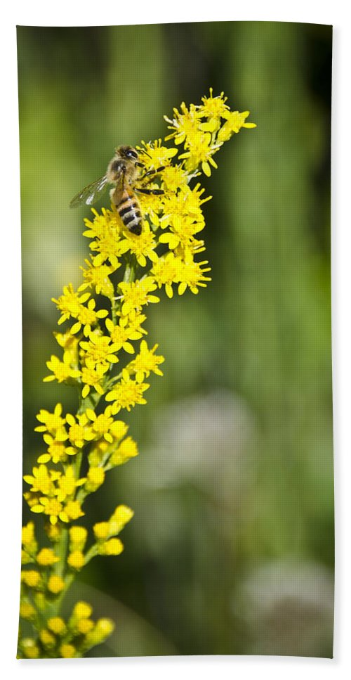 Bee Bath Sheet featuring the photograph Busy Bee On Yellow Wildflower by Carolyn Marshall