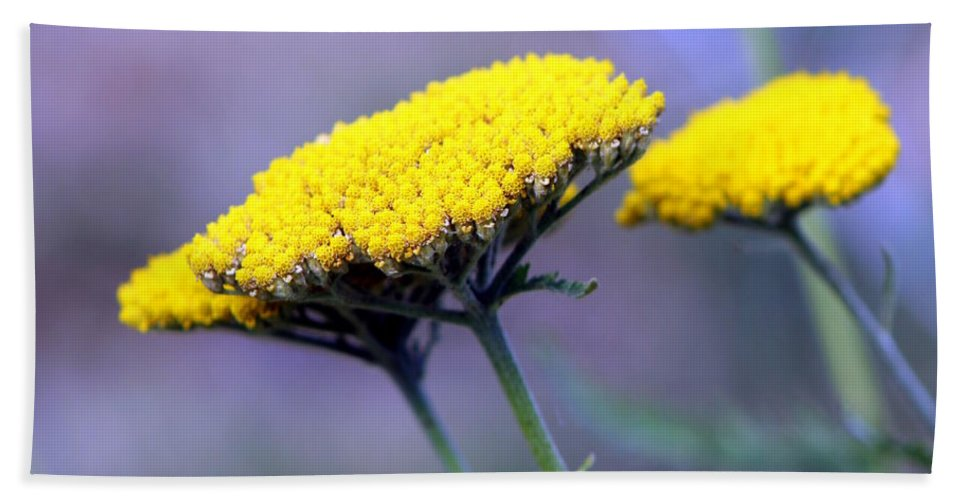Flowers Hand Towel featuring the photograph Butter Weeds by Deborah Crew-Johnson