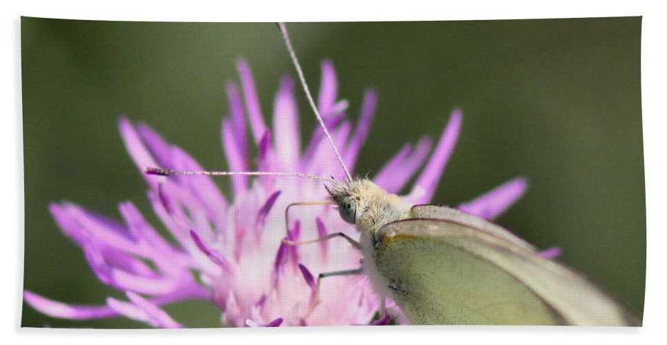 Swallowtail Butterfly Bath Sheet featuring the photograph Butterfly - Plain And Simple by Travis Truelove