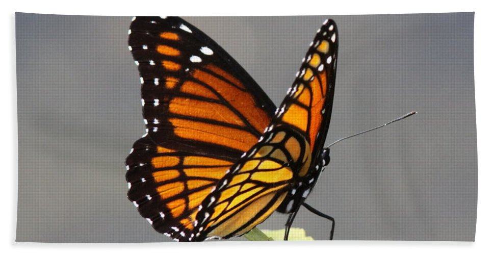 Viceroy Bath Sheet featuring the photograph Butterfly - Sitting On The Green by Travis Truelove
