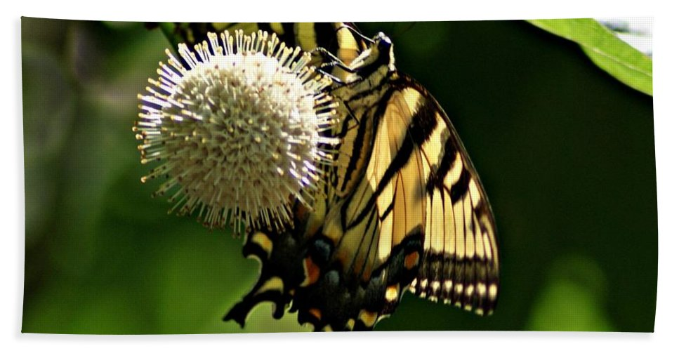 Butterfly Bath Sheet featuring the photograph Butterfly 2 by Joe Faherty
