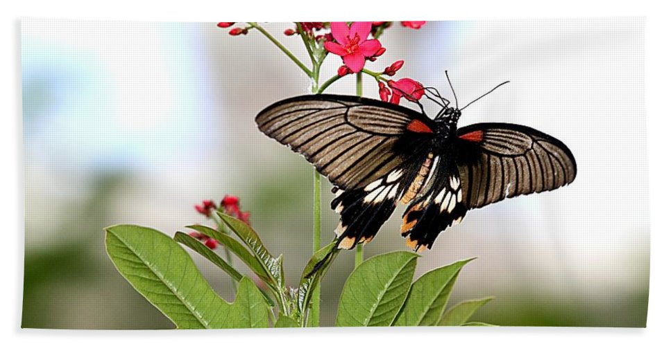 Butterfly Hand Towel featuring the photograph Butterfly Candy by Elizabeth Winter