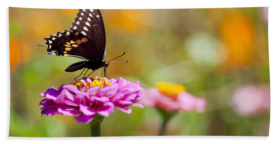 Butterfly Hand Towel featuring the photograph Butterfly On Pink Zinnia by Amy Jackson