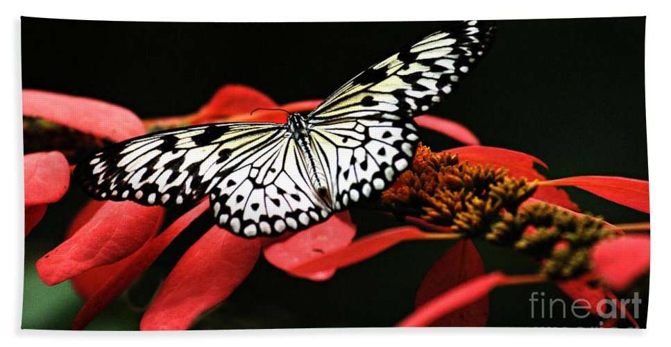 Butterfly Hand Towel featuring the photograph Butterfly On Red by Bob Christopher