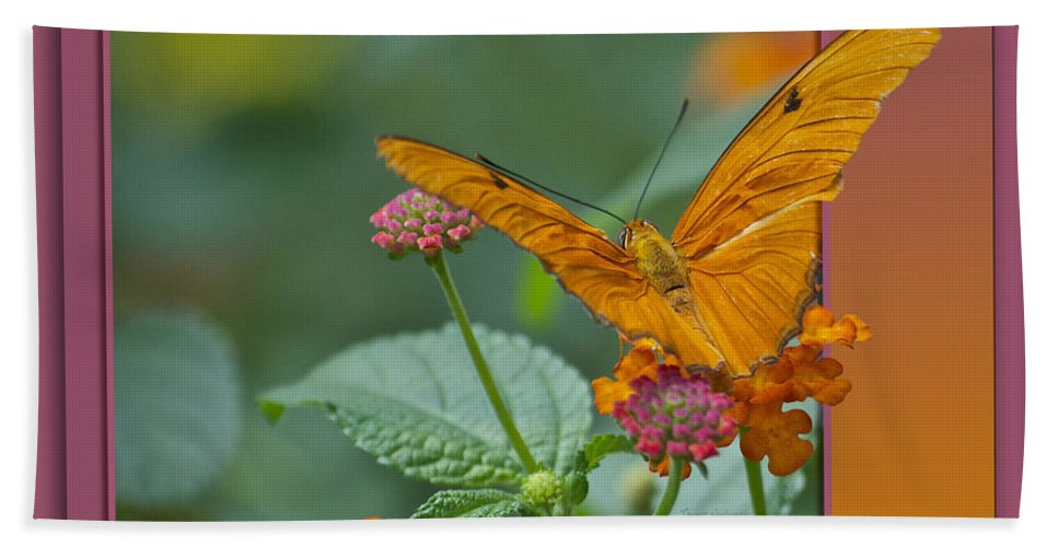 Test Bath Sheet featuring the photograph Butterfly Orange 16 By 20 by Thomas Woolworth