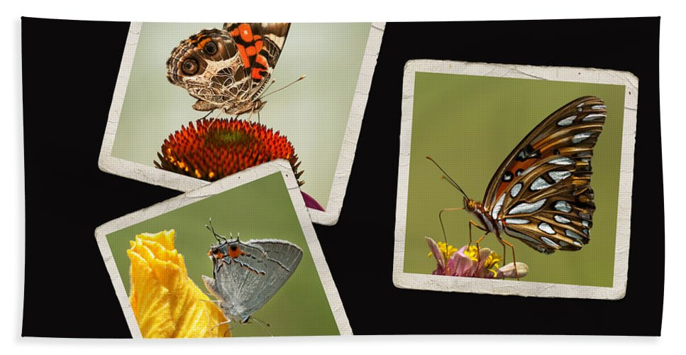 Butterflies Bath Sheet featuring the photograph Butterfly Picture Page Collage by Kathy Clark