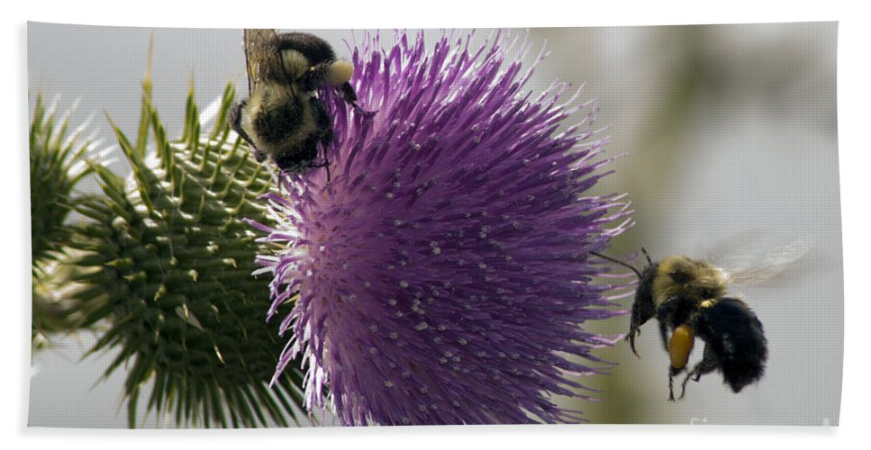 Bee Bath Sheet featuring the photograph Buzz And Munch by Darleen Stry