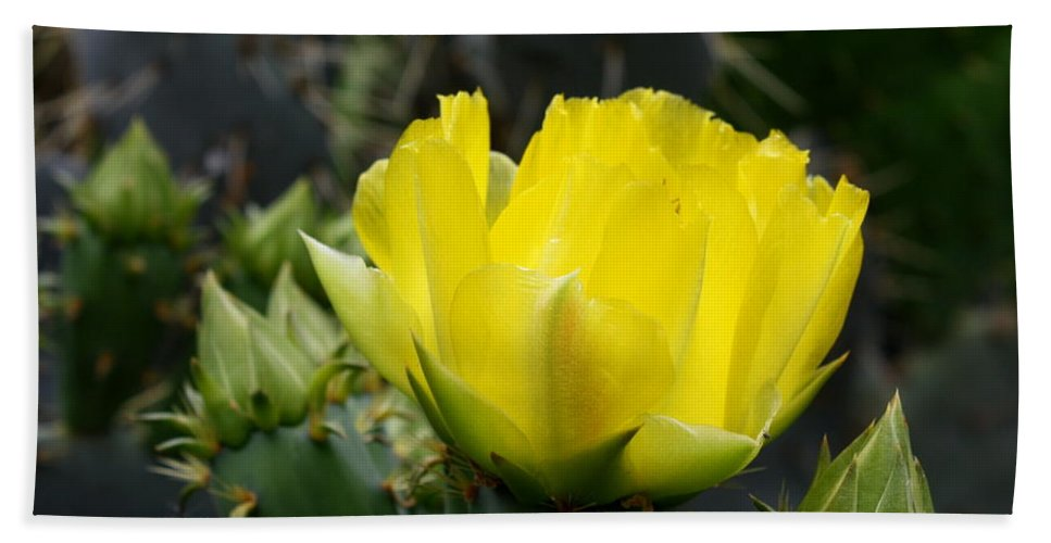 Cactus flower yellow rose of texas prickly pear bath towel for sale cactus bath towel featuring the photograph cactus flower yellow rose of texas prickly pear by terry mightylinksfo