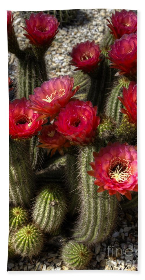 Red Hand Towel featuring the photograph Cactus With Red Flowers by Jim And Emily Bush