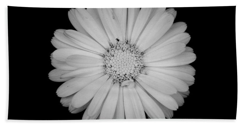 Calendula Bath Sheet featuring the photograph Calendula Flower - Black And White by Laura Melis