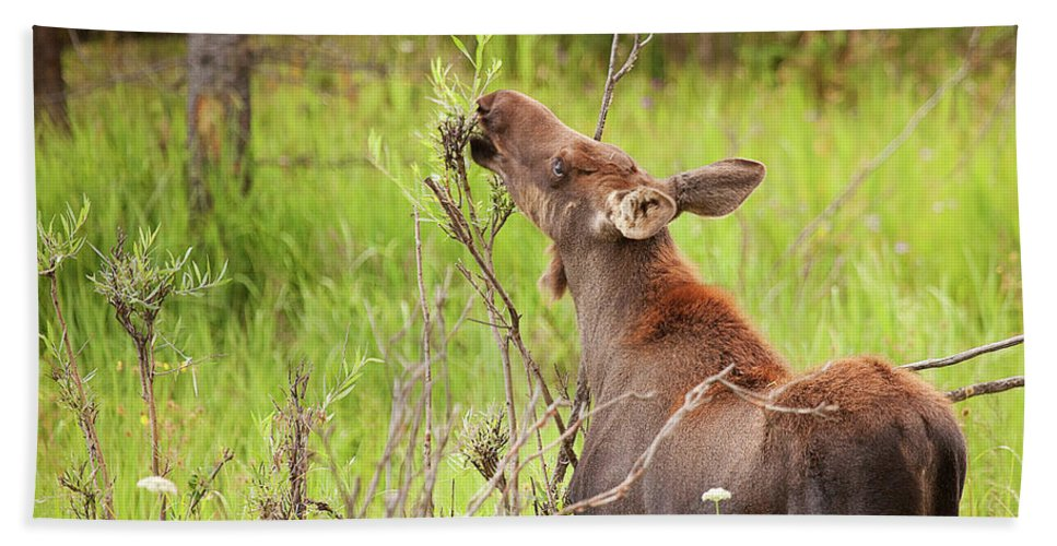 Moose Calf Photograph Bath Sheet featuring the photograph Calf In The Willows by Jim Garrison